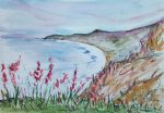 Wild Flowers dance over Killiney Bay